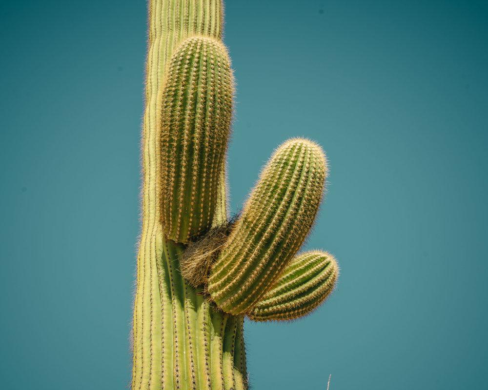 saguaro-45.jpg