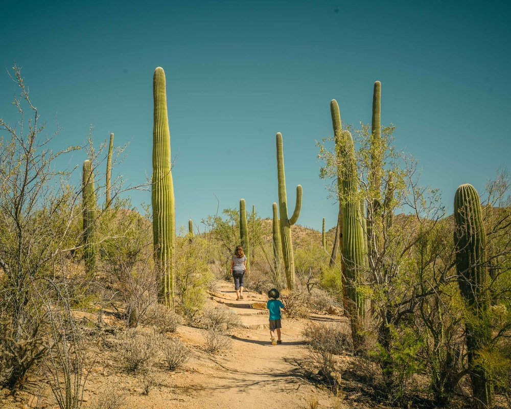 saguaro-46.jpg