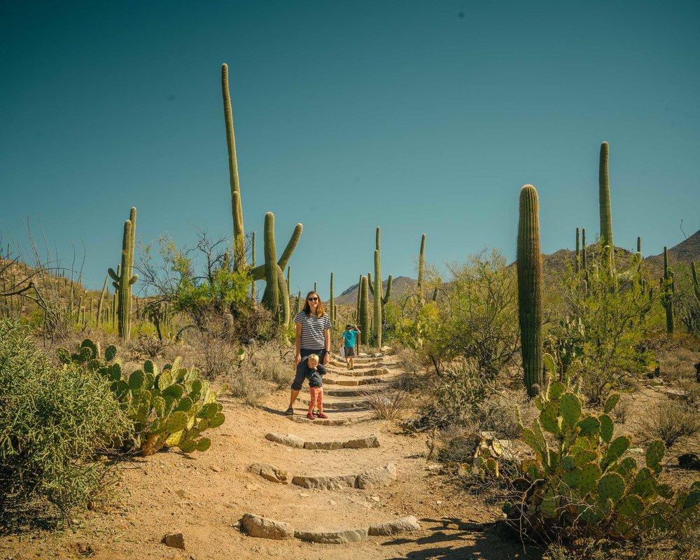 saguaro-48.jpg