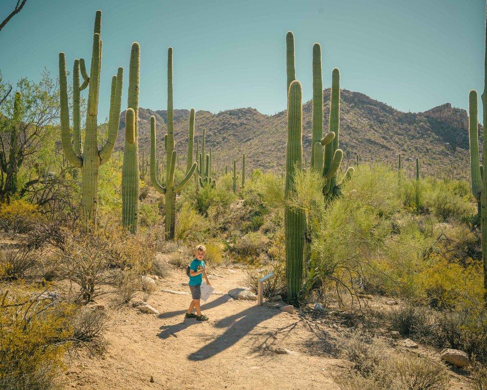 saguaro-49.jpg