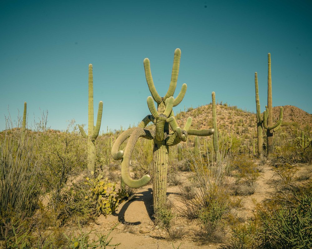 saguaro-51.jpg