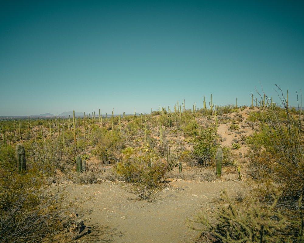saguaro-55.jpg