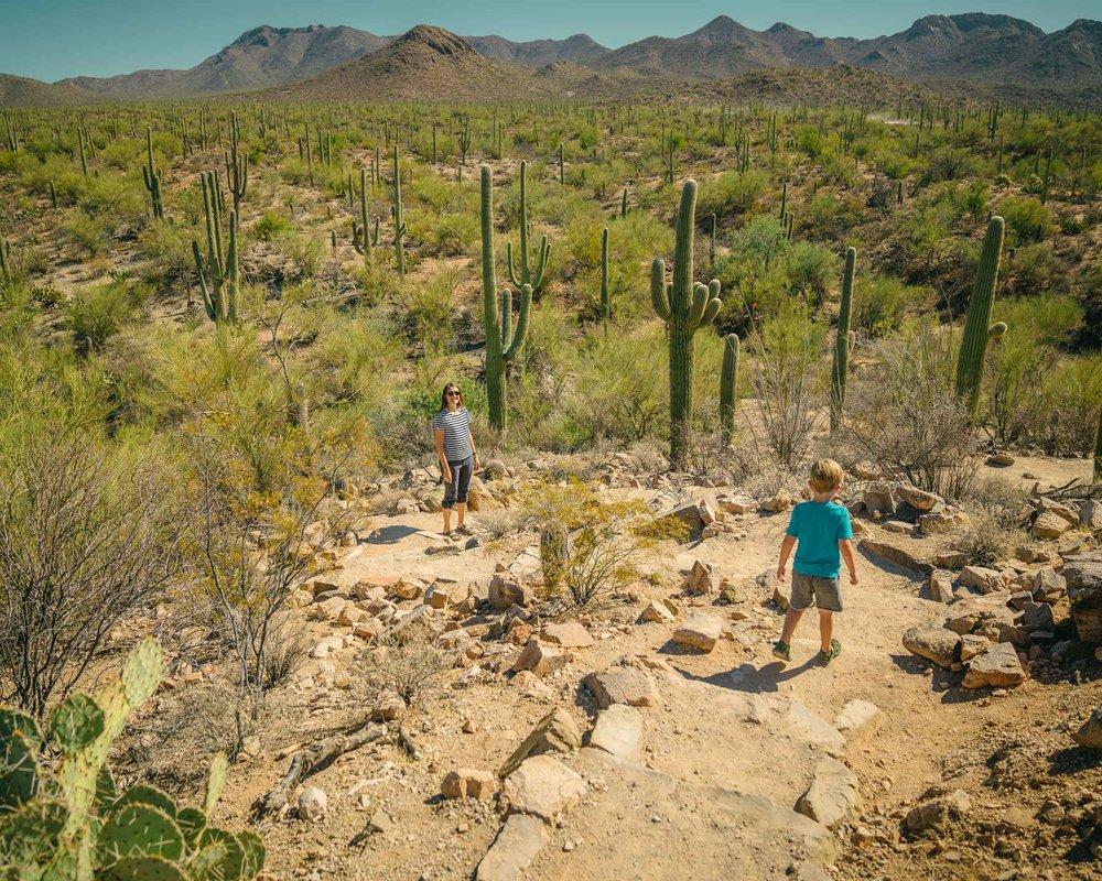 saguaro-56.jpg