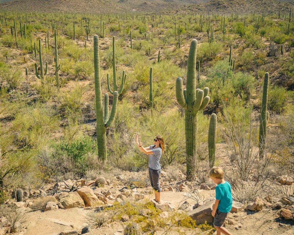 saguaro-57.jpg