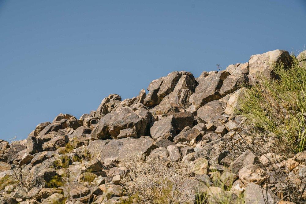 saguaro-60.jpg