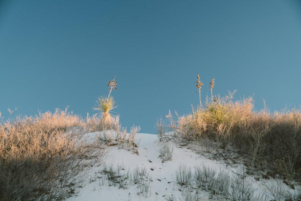white-sands-12.jpg
