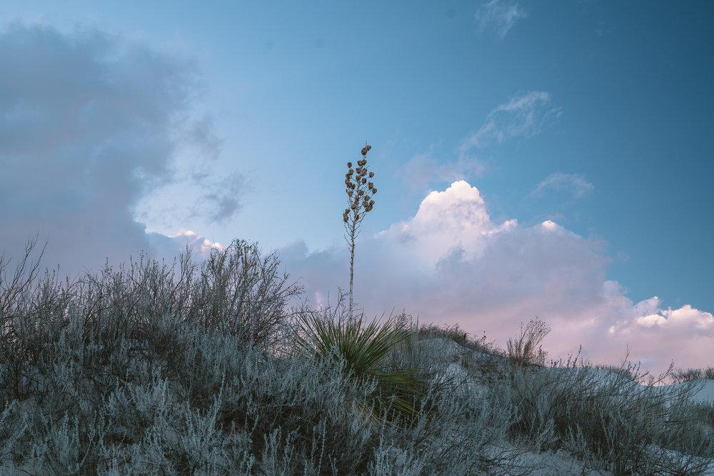 white-sands-29.jpg