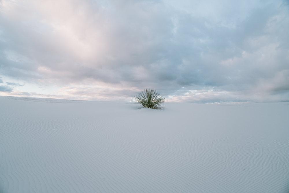 white-sands-88.jpg