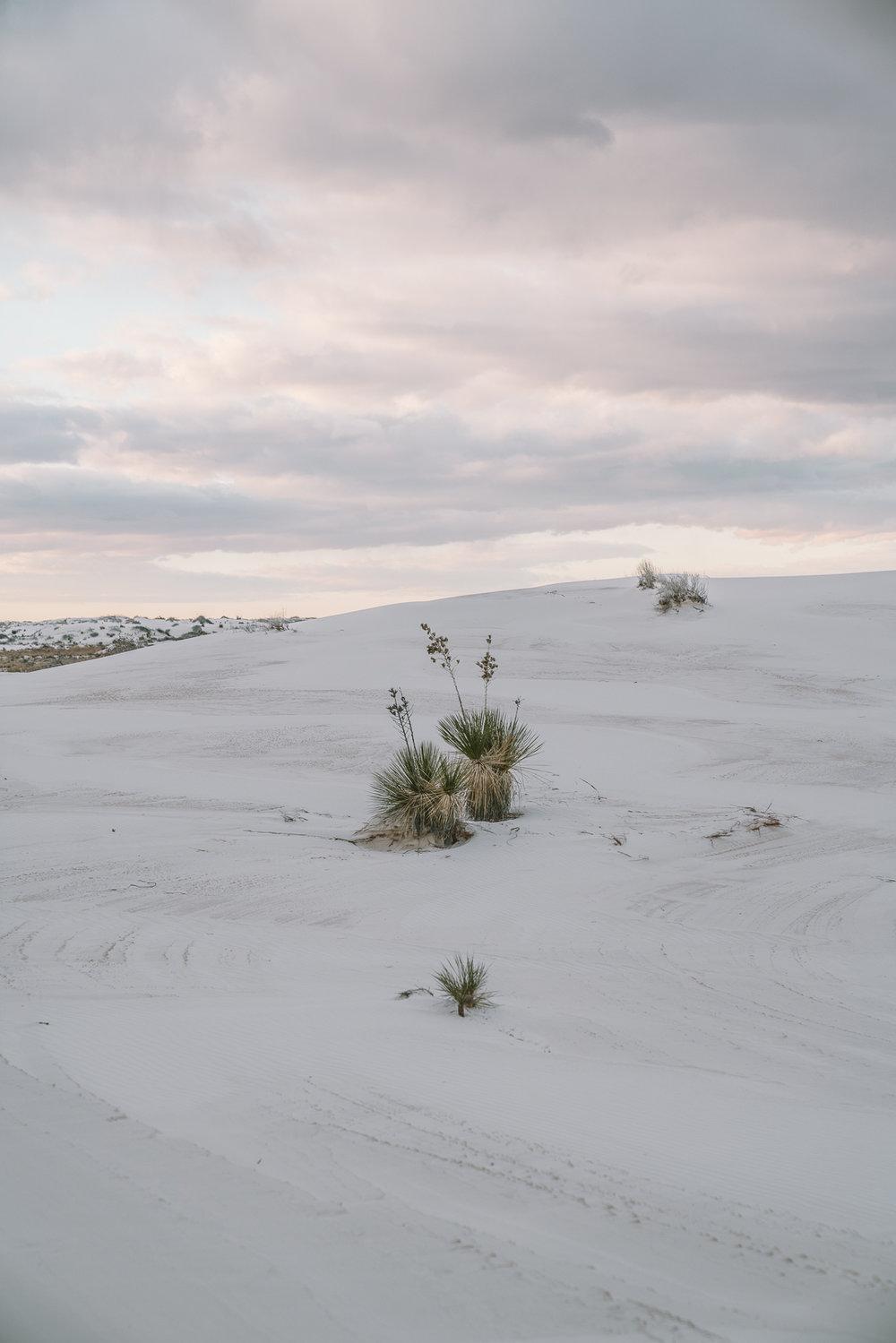 white-sands-94.jpg