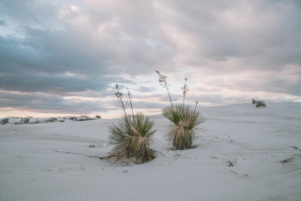 white-sands-97.jpg