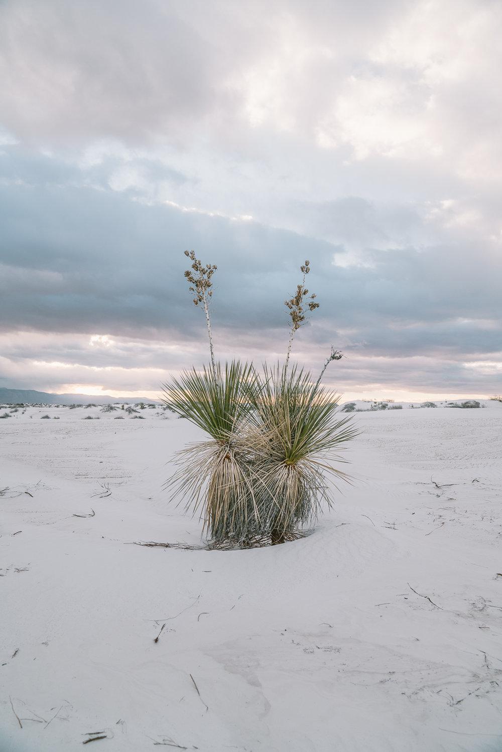 white-sands-99.jpg