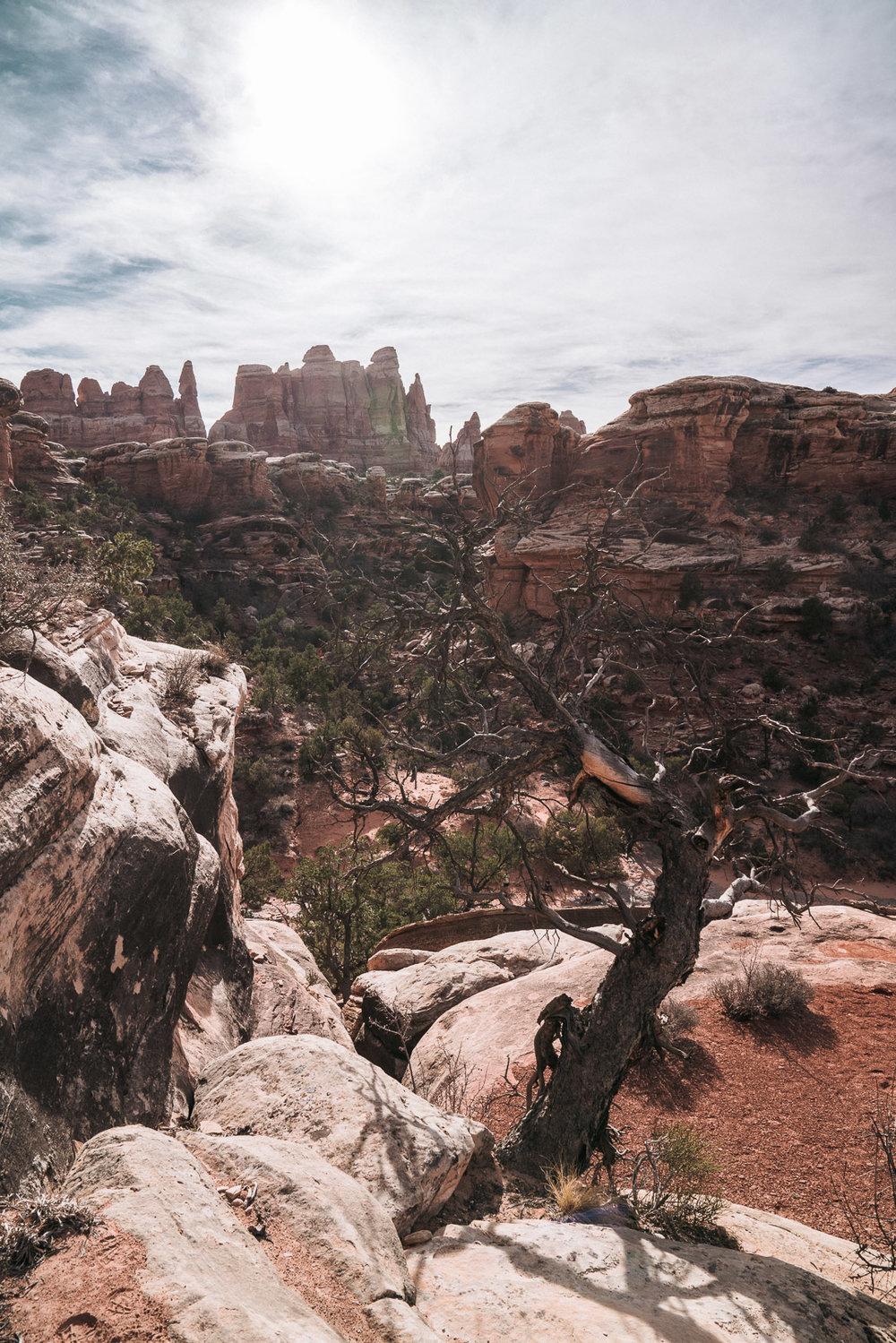 canyonlands-40.jpg