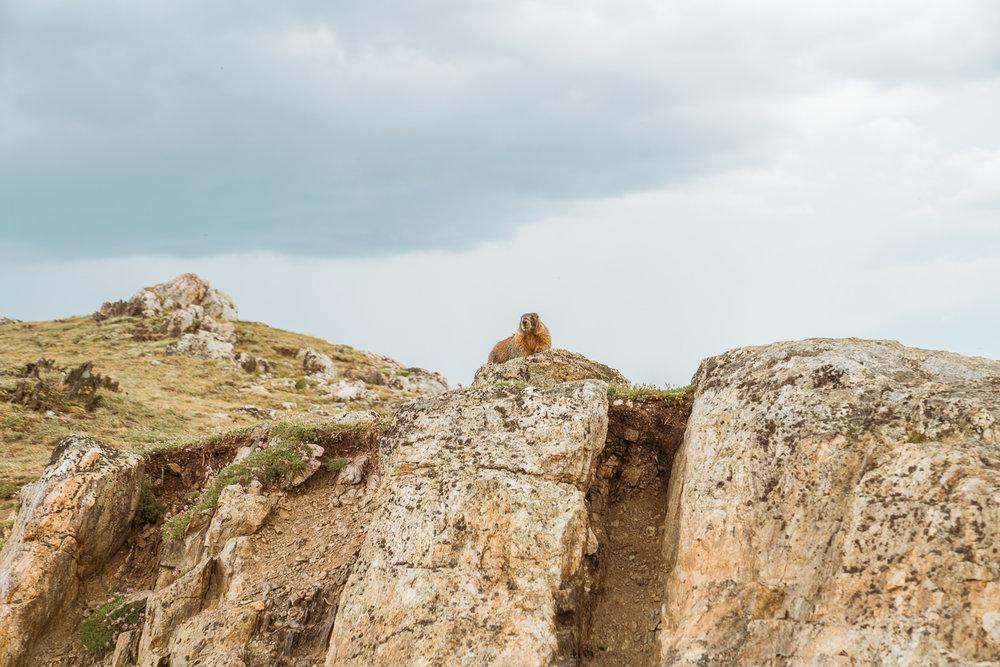 rocky-mountain-15.jpg