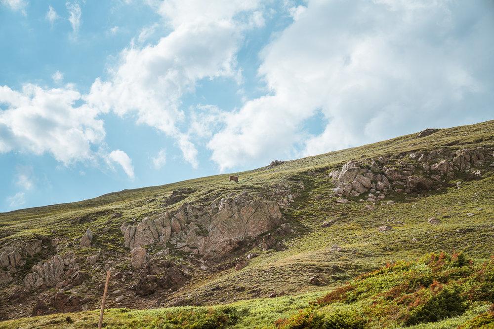 rocky-mountain-33.jpg
