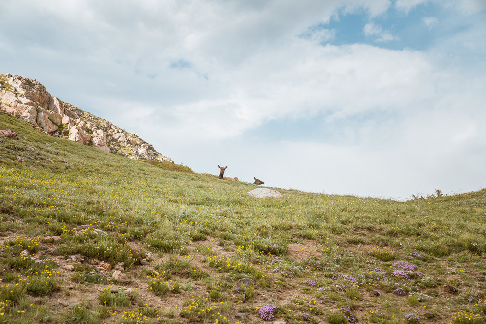 rocky-mountain-34.jpg