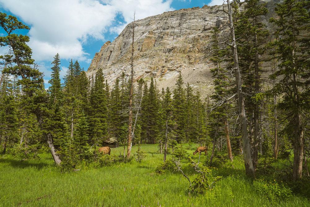 rocky-mountain-97.jpg