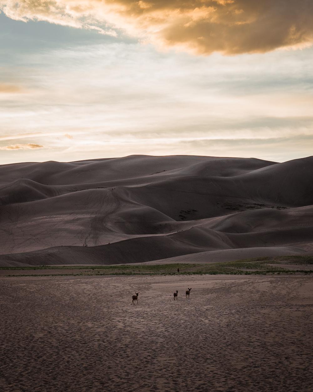 great-sand-dunes-32.jpg