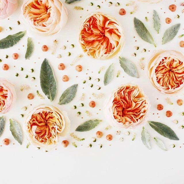 HELLOOOO SPRING 🌺🌼🌸 Bring warm weather please 💕 #springishere #flowerstagram 📷 @robertandstella