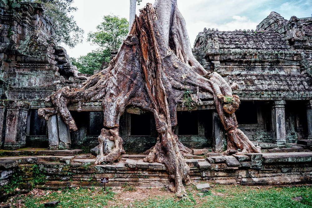 Roots in the temple