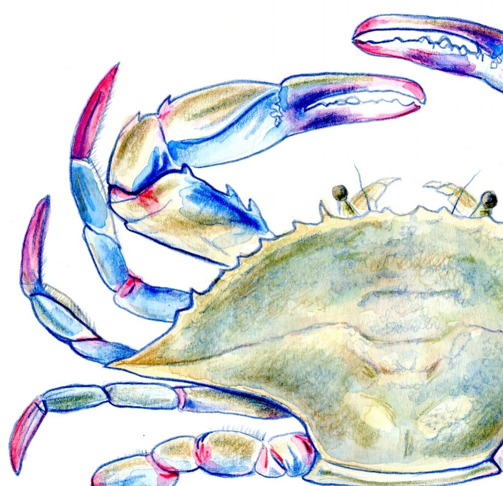 blue crab painting.jpg