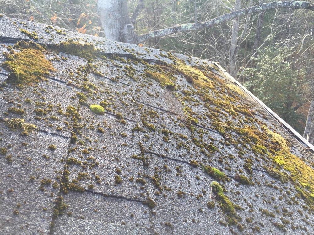 moss on roof.JPG