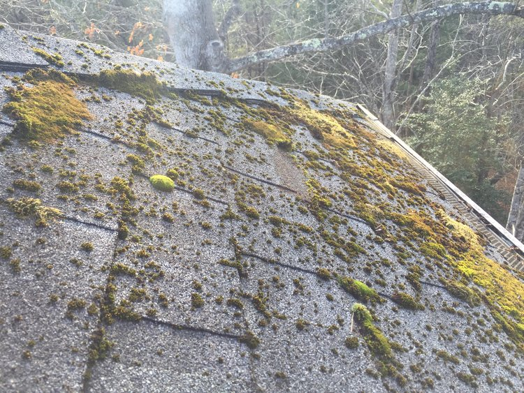 Exterior Home Cleaning in Asheville North Carolina