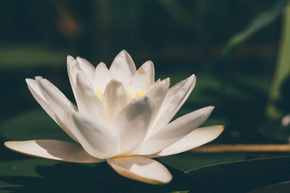 mindfulness flower.jpg