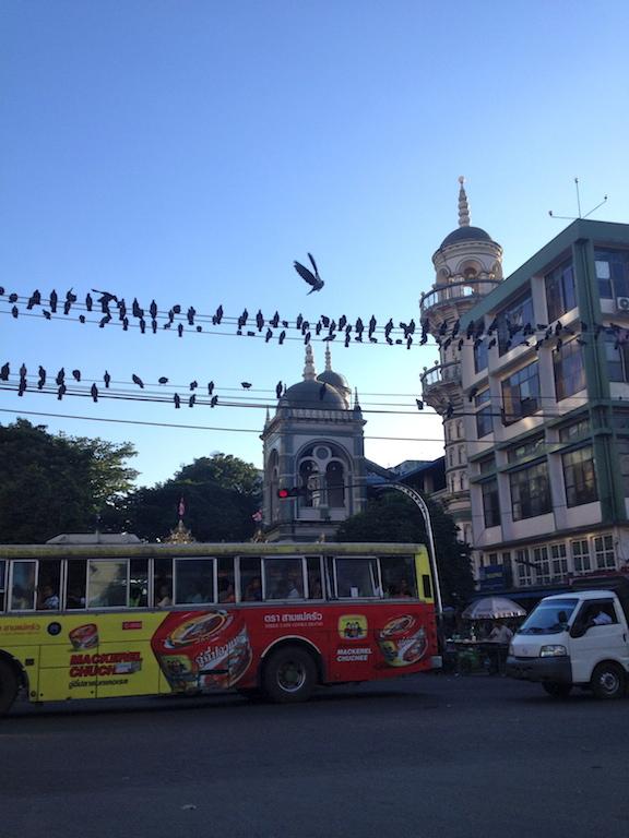 myanmar_yangon_pigeons.jpg