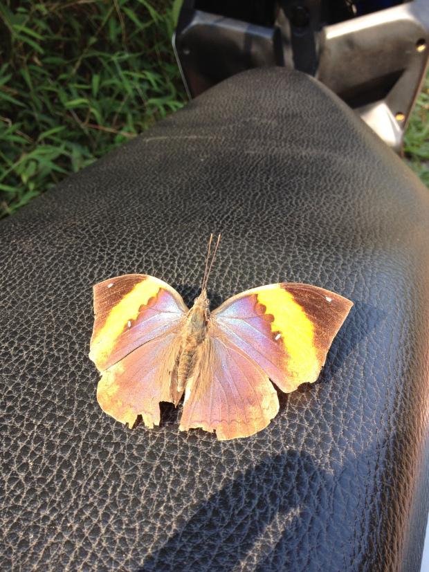laos_luang_namtha_butterfly.jpg