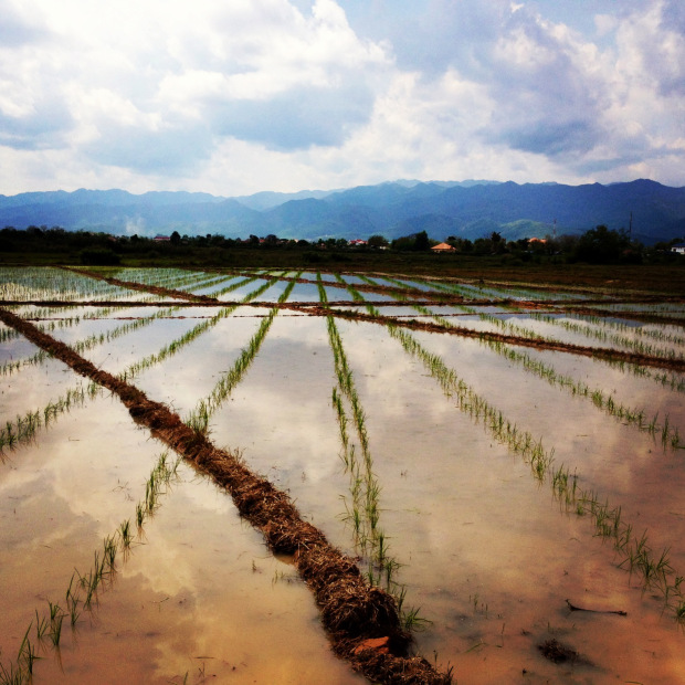 laos_luang_namtha_beer_rice_field.jpg