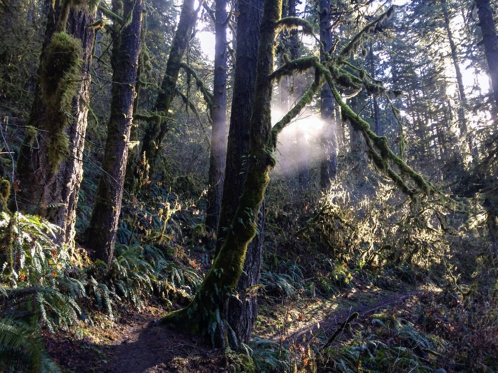 Fall Creek OR