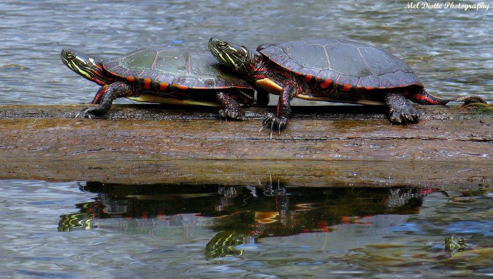 turtlek.jpg