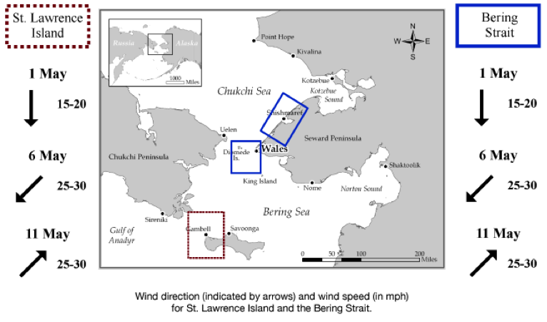Figure 1. Map of Sea Ice for Walrus Outlook focus area with example weekly wind forecast information.