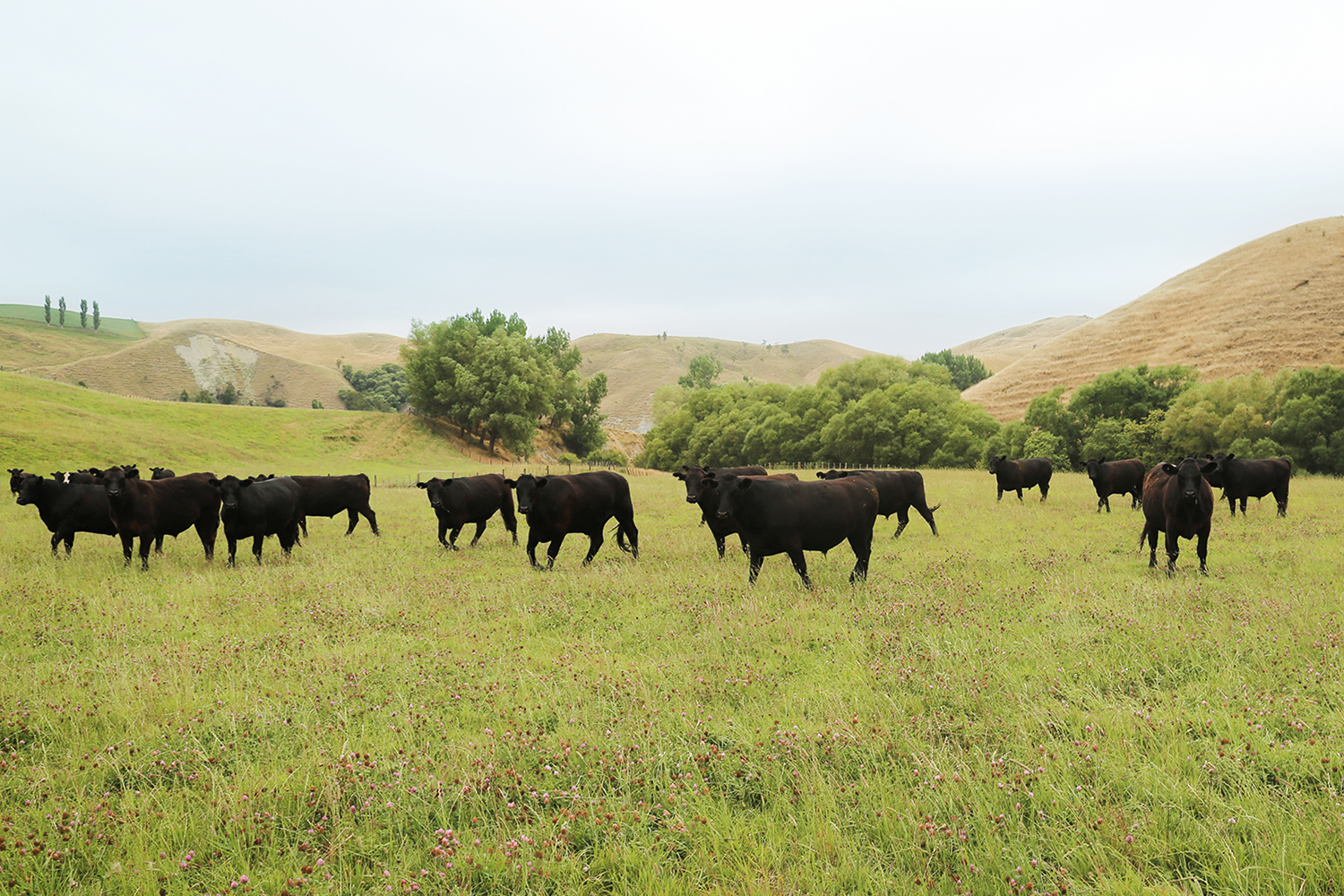 Blue apron niman ranch - Our Story