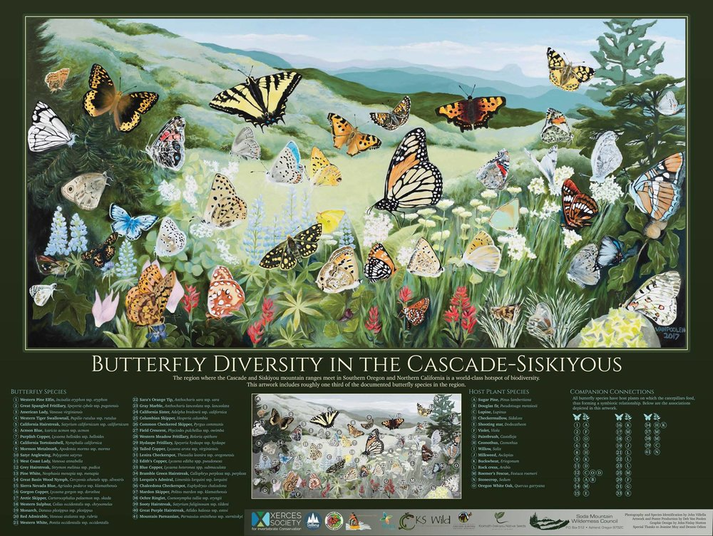 The educational poster includes keys for the butterfly species and their plant host species. Now available for sale.