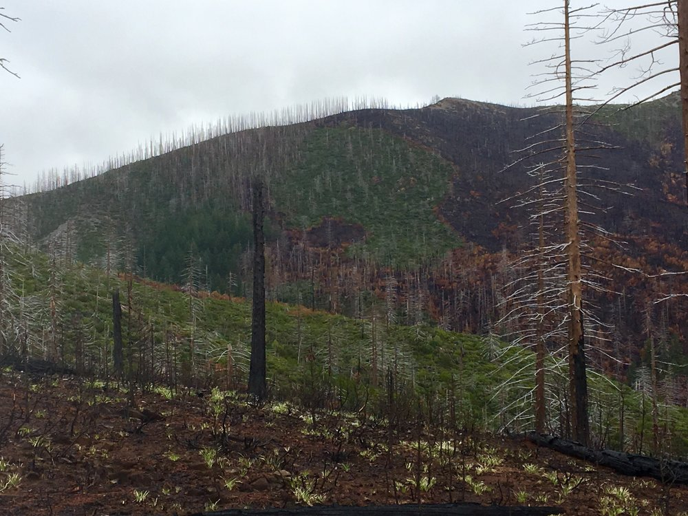 Chetco Bar Fire, Kalmiopsis Wilderness, Mosaic Burn Pattern