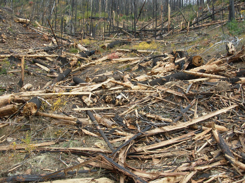 Highly flammable logging slash left behind after clearcutting in the Klamath National Forest - Panther timber sale post-fire logging in the Elk Creek Watershed.