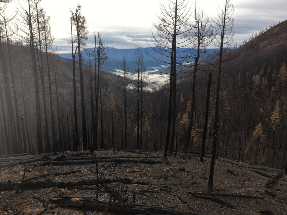 Klamath National Forest – Potential Logging Unit - Miller Complex Fire – Seiad Watershed – Nature will recover this forest faster, cheaper, and more effectively that post-fire logging on sensitive and steep soils.