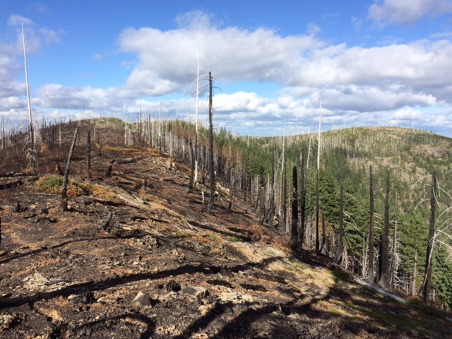 Read more about the 2017 Chetco bar fire in the Kalmiopsis region, and what land managers have learned since the 2002 Biscuit fire in our blog post.