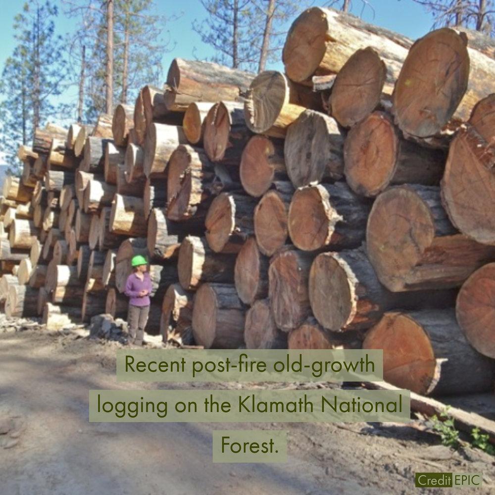 knf-logging.jpg