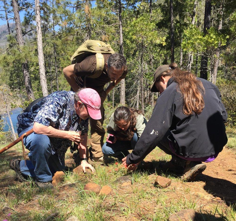 KS Wild Board President Joe Flaherty helping hike participants to identify plants
