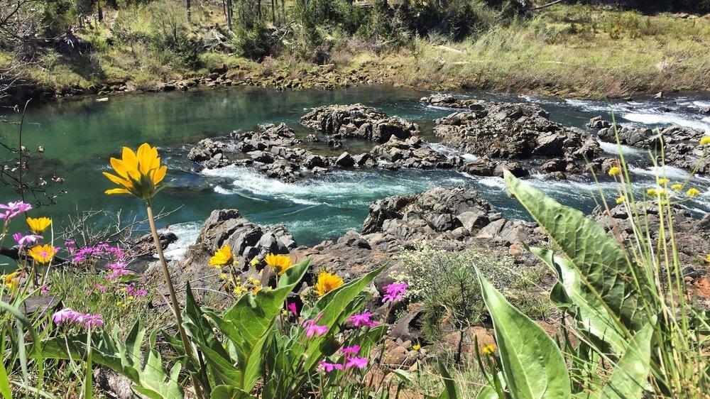 illinois-river-wildflowers.JPG