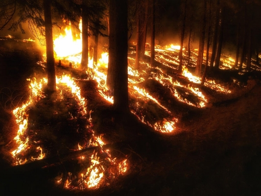 Fire burns in the understory of a forest on public lands.