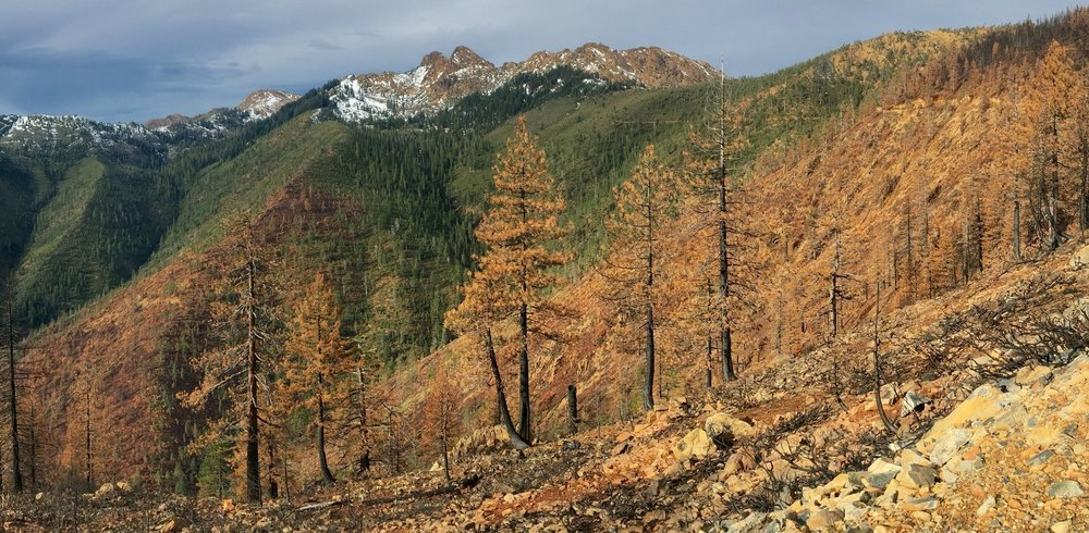 The Cook and Green pass near the Red Buttes Wilderness where the KNF is moving forward with yet another post-fire salvage project