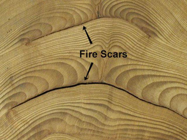 fire_scar.jpg