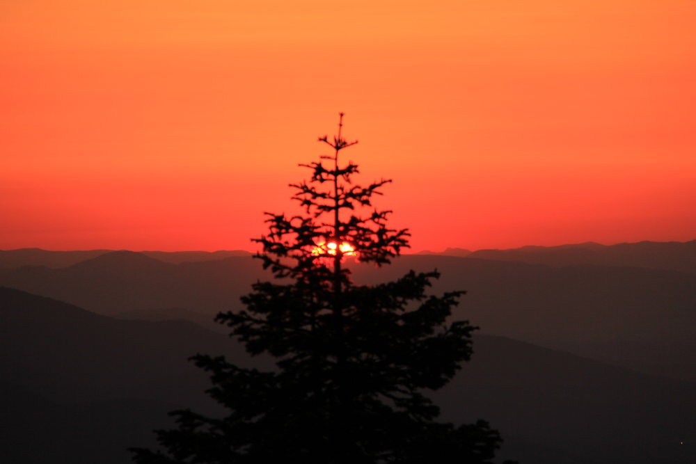 sunset-tree_11343396166_o.jpg