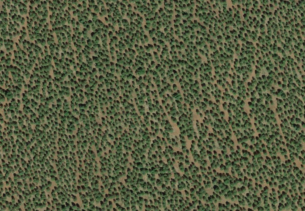clearcut_plantation7.JPG