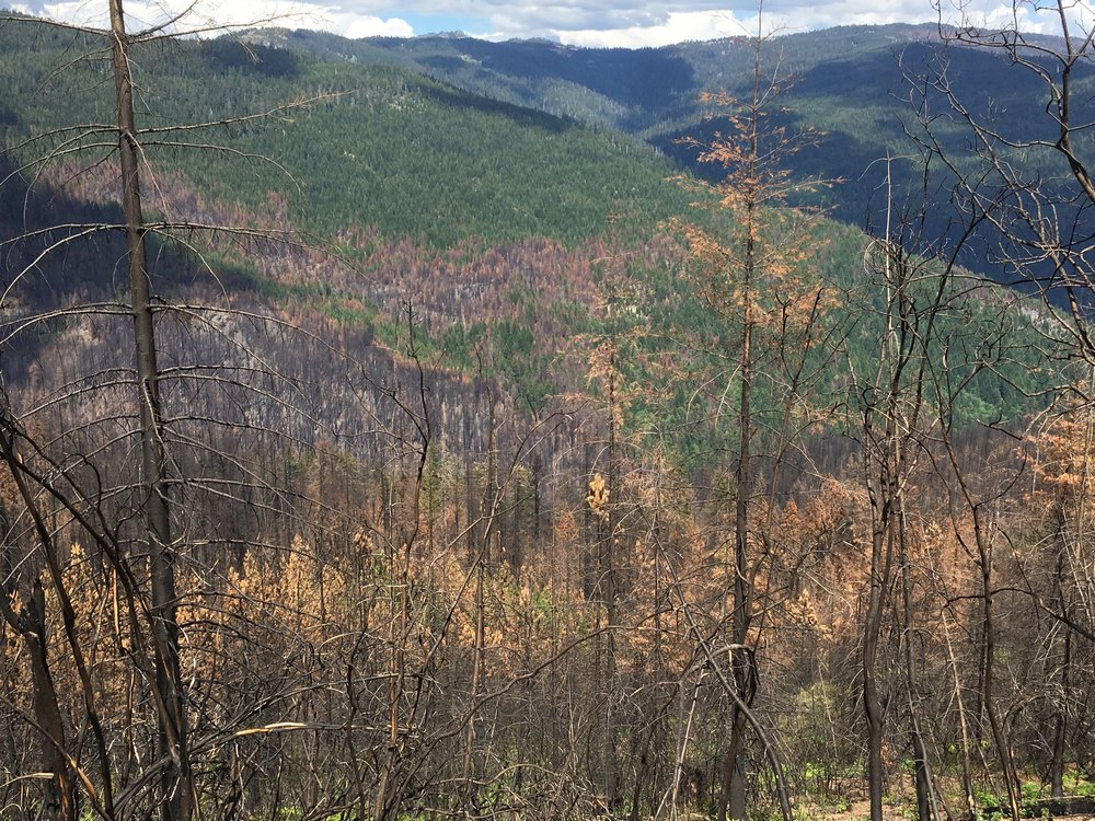 Why do plantations burn hotter? - CLICK HERE TO FIND OUT