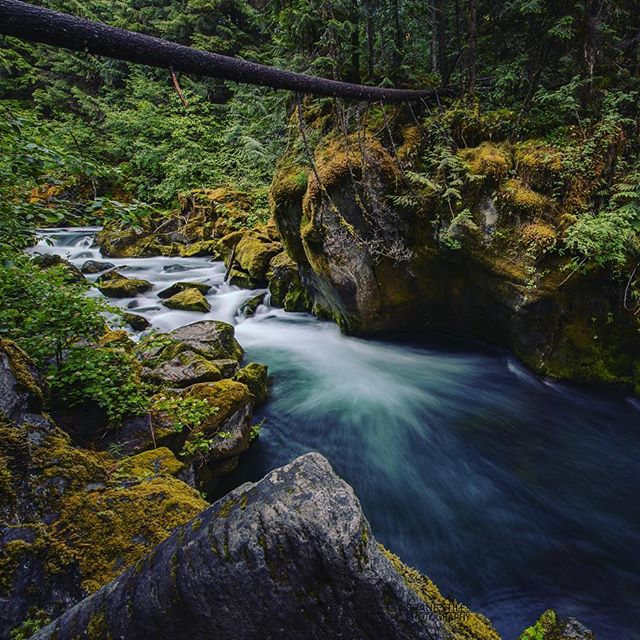 The Rogue Riverkeeper program will keep the lifeblood of southern Oregon communities - the Rogue River and its tributaries - pollution free.