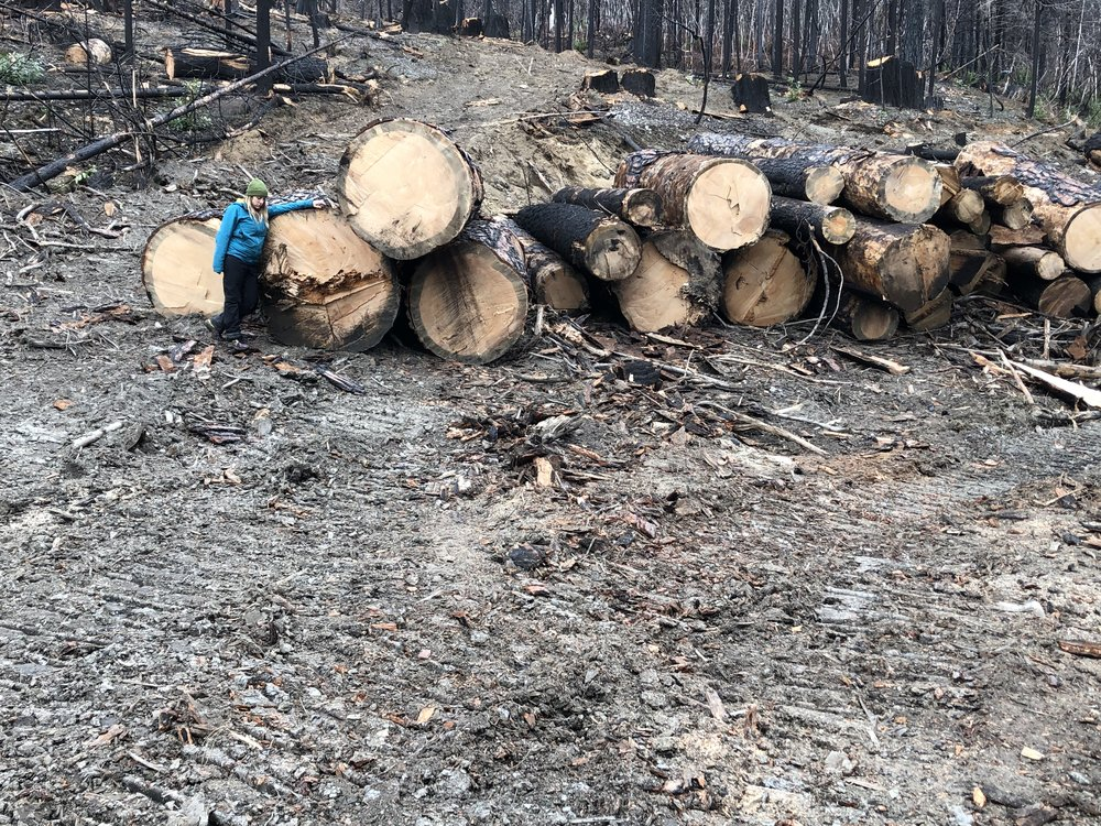 While forest restoration is on hold, clearcut logging of massive snags (burned trees) along the Siskiyou Crest is taking place while the government is shutdown.